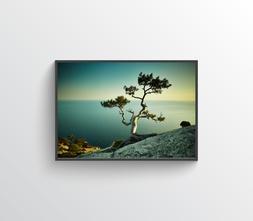 Tree One Photo