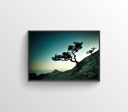 Tree Two Photo
